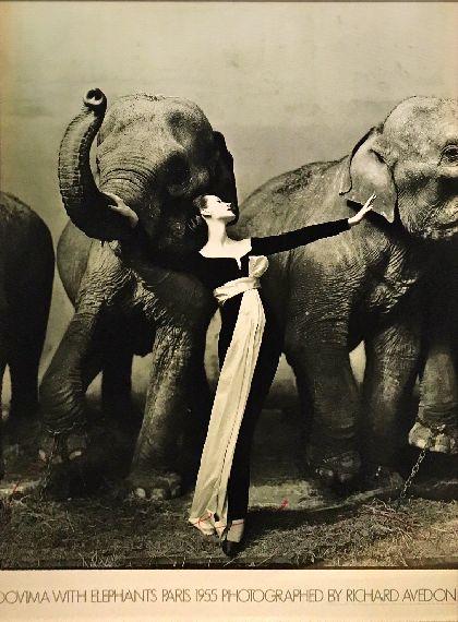 Dovima with elephants Paris 1955