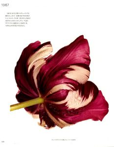 「PASSAGE / A Work Record / Irving Penn 」画像3