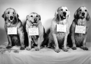 DOGS for PEACE【サイン入】/ブルース・ウェーバー(DOGS for PEACE【Signed】/Bruce Weber)のサムネール